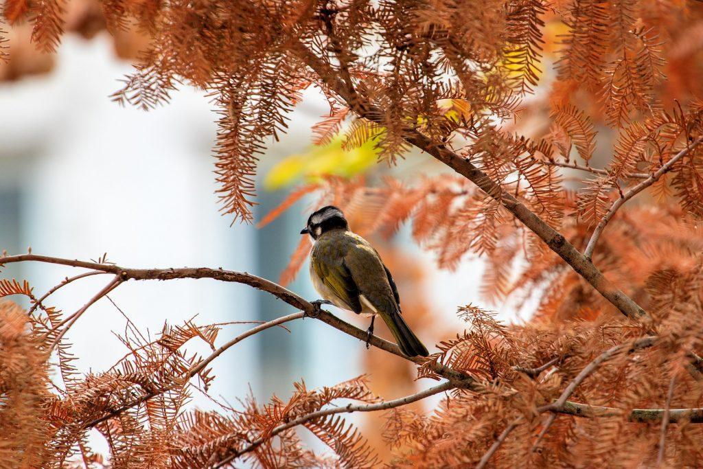 bird-4848178_1920